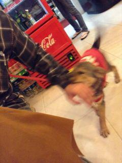 マンダリンカフェの犬